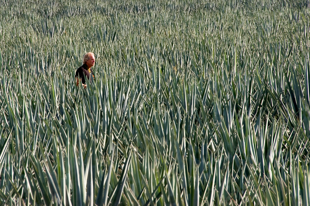lost in a sea of agave