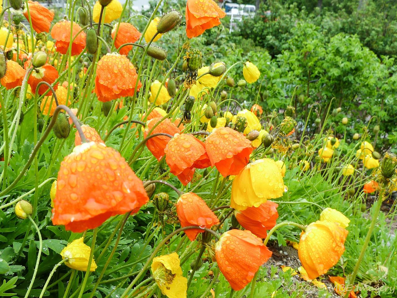 Northernmost Botanical Garden in World