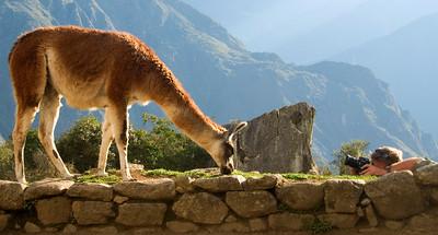 dan shooting a llama