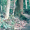Trails Went Up and Down Hills - Bukit Timah Nature Reserve - Singapore - March 2002<br /> This reserve contains more species of trees than the entire North American continent.