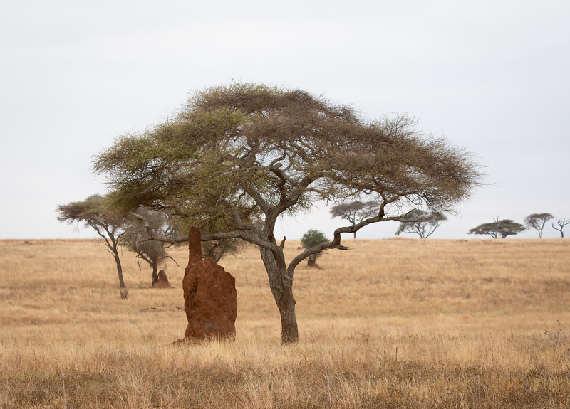 Termite Mound or Hand?