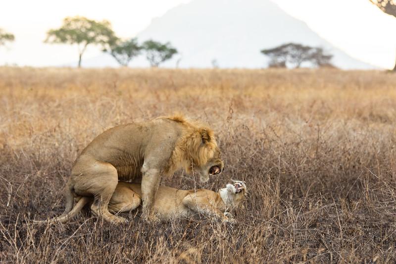 Lion Passion (short-lived)