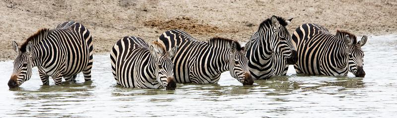 Zebra's Watering Hole