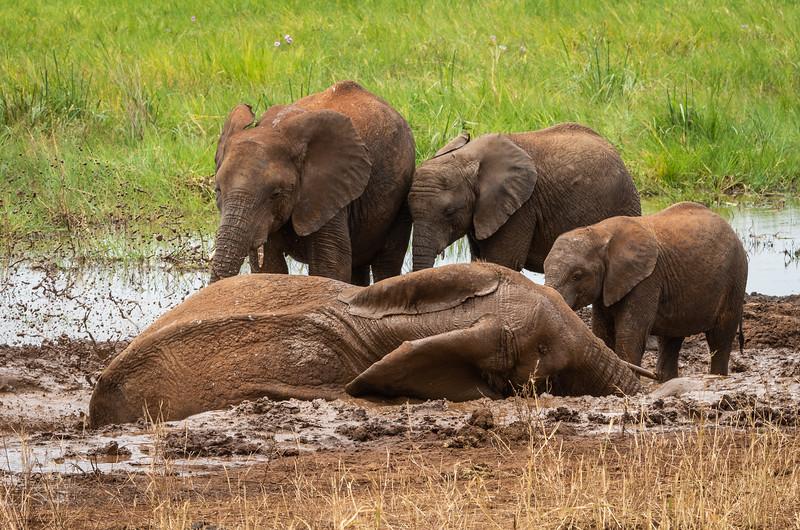 Luxurious Mud Bath