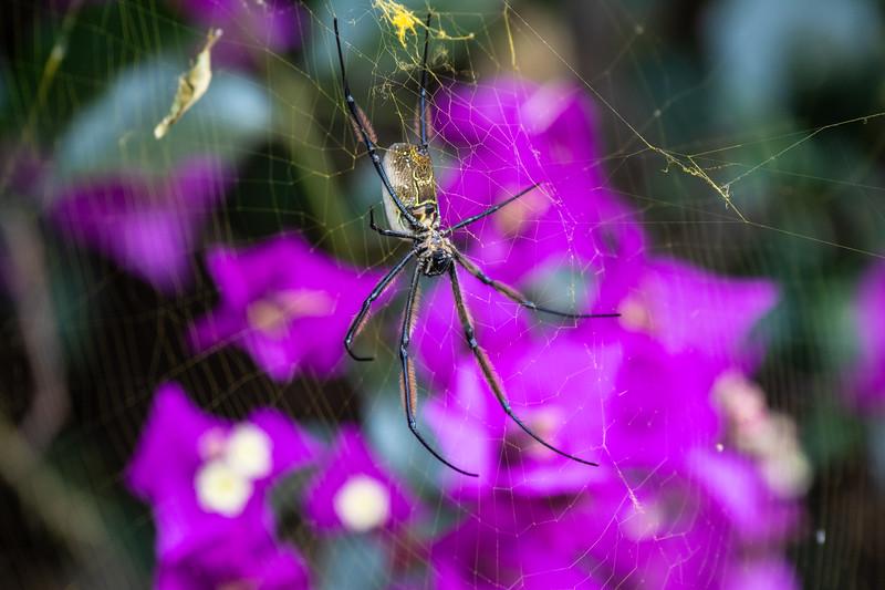 Spider in Arusha Coffee Plantation