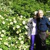Wild Roses - Botanical Garden, Visby Sweden