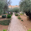 Path in the Garden of Gethsemane