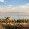Sea of Galilee Panorama