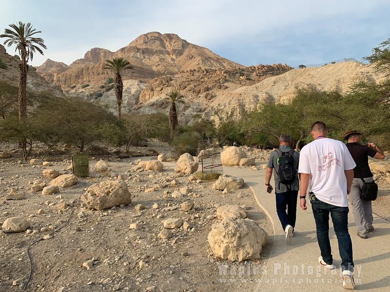 Rosses walking to Ein Gedi