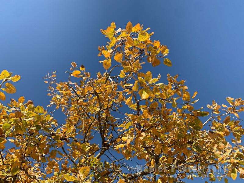Tree and Sky at Yad Vashem