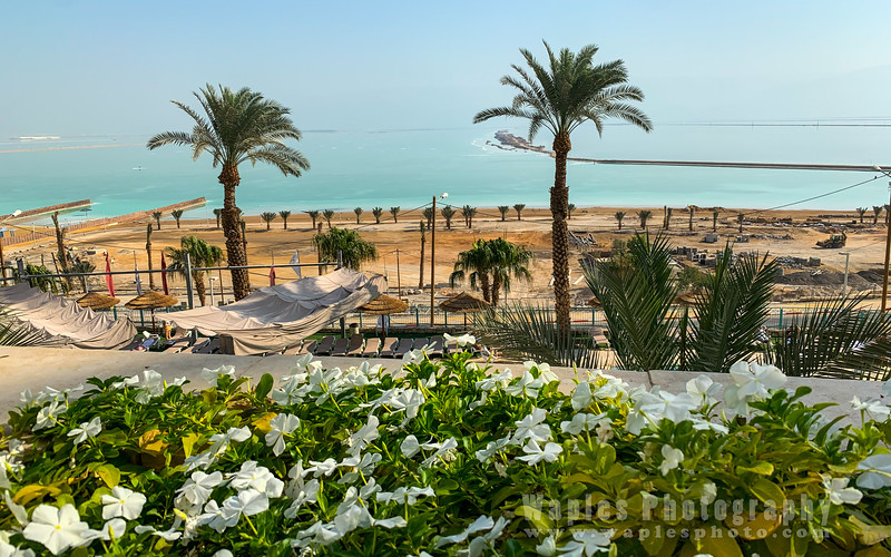 Flowers and Dead Sea