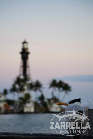 """Royal Tern"" (Hillsboro, Florida)"