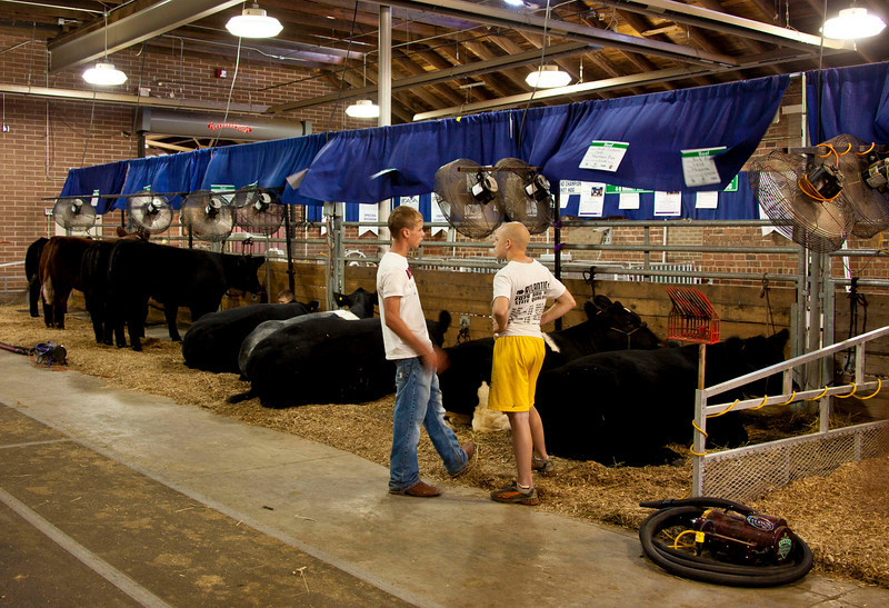 In the cattle preparation barn, before sign-in, and before judging