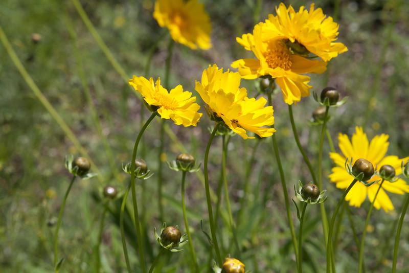 Oklahoma Flowers
