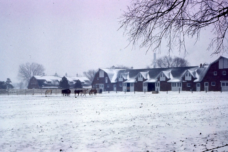 Horse barns were just down the street