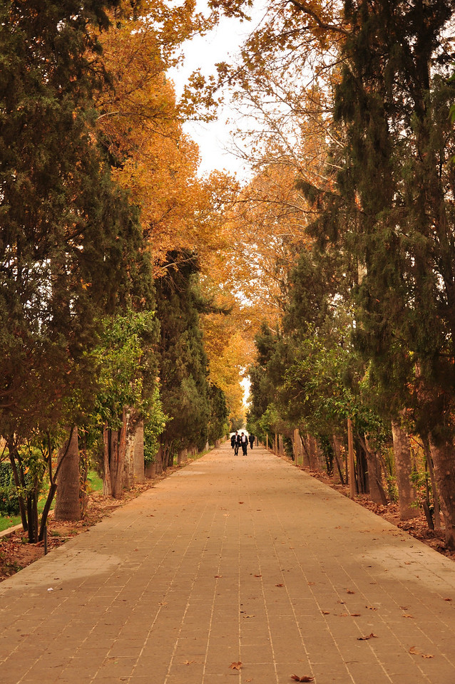 Bagh-e Eram (Eram Gardens).The gardens are now operated by Shiraz University and are very pretty even in November which is the beginning of winter. The garden is famous for its extensive rose gardens which bloom in March.