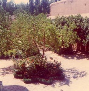 Mahmud's garden
