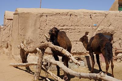Farahzad oasis