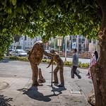 16-10-27_Shiraz-240