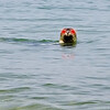 Evil seal!