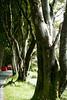 0325 Road along Lough Pollacuppul, near Kylemore Castle in Connemara, Ireland