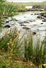 0313 Lower  Ashleigh Falls on the Erriff River, near Leenane, Ireland