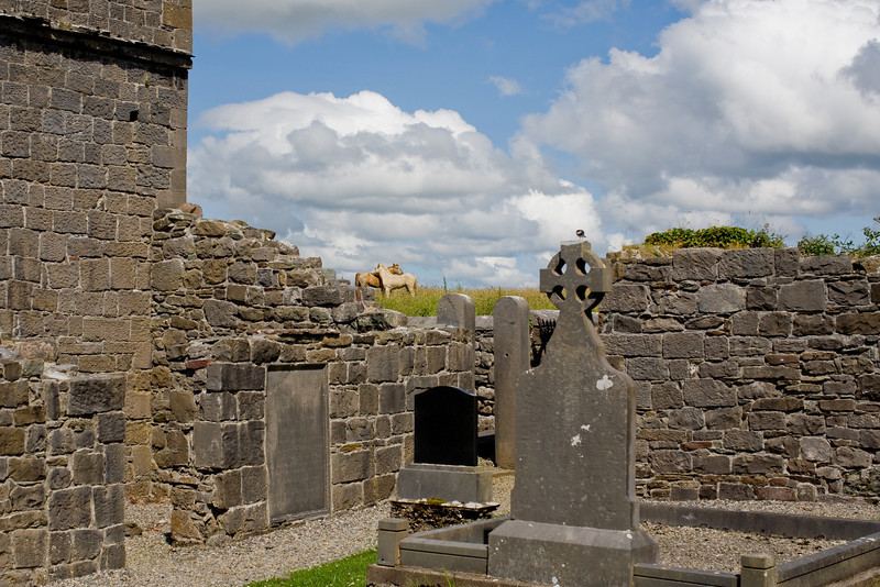This abbey in ruin was just down the way from Croag Patrick and the Coffin Ship monument.  The horses in the distance were grooming each other.