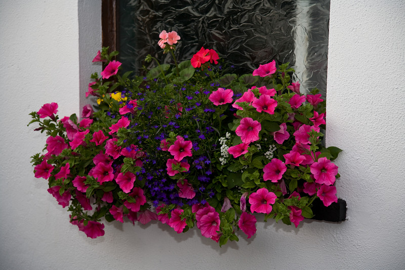 Seamus's bar naturally had the requisite window box of flowers on the patio.