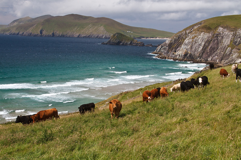 Ireland_070211_170