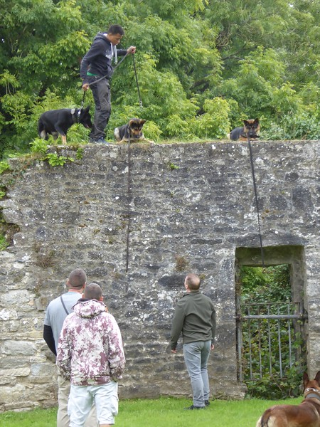 Police Dog Training at Bridgetown Priory