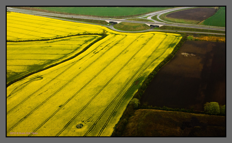 Yellow field<br /> Agricultural landscape outside Dublin