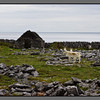Stony landscape with goats<br /> Killeany