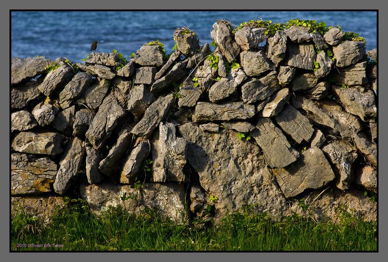 Stone fence with bird