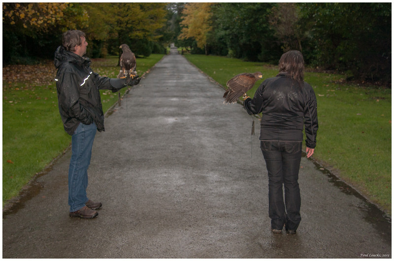 Falconry enthusiasts from our tour group