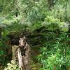 Irish forest.