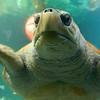 Closer to Mr Turtle.