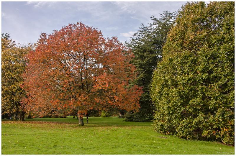 Autumn in November, grounds of Blarney Castle.