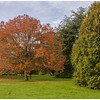 Autumn in November, grounds of Blarney Castle.
