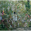 """The Wishing Tree at Saint Brigid's Holy Well, Liscannor, County Clare.<br /> <br /> """"On Saint Brigid's Eve, as night fell,<br /> my mother and I went to Saint Brigid's Well<br /> Where the candles do burn and the great walls do shine<br /> on the graves of the dead and the vaults of O'Brien"""""""
