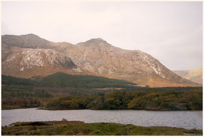 An effort at reforestration in the Connemara.