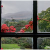 Indoor photography was prohibited at Muckross House. This marginal shot was aimed outdoorts through a window at the grounds and a mountain in the distance.