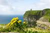 Ireland-9542