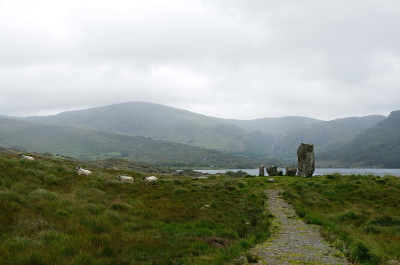 Ireland-9441