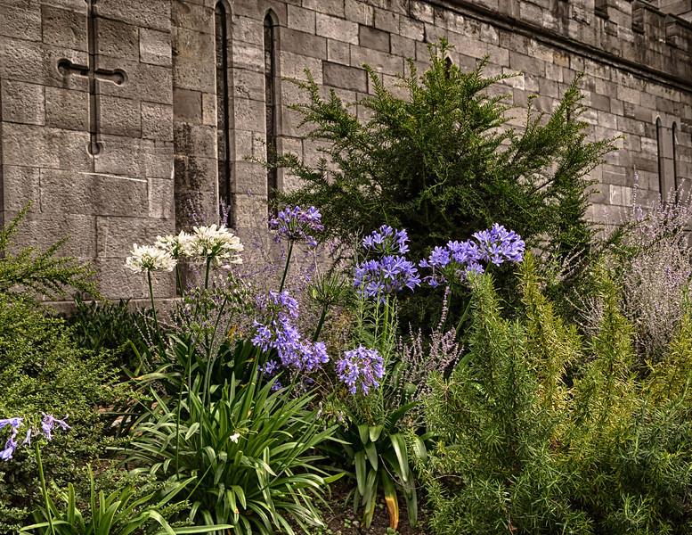 Flowers in the courtyard of Dublin Castle.