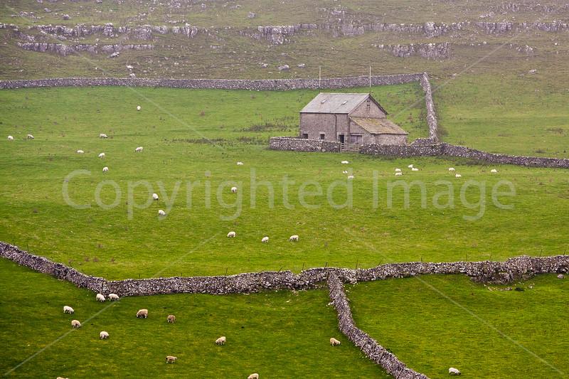 Sheep Farm in the Dells