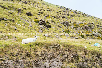 High country farming Slieve Mish Mountains, Ireland