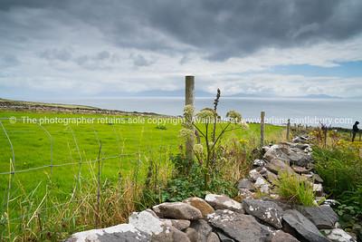 Coastal County Kerry along Wild Atlantic Way scenic tourist drive, rock wall fences across green fields