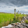 Coastal County Kerry along Wild Atlantic Way scenic tourist drive, rock wall fences across green fields