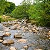 Rocky river flowing between trees