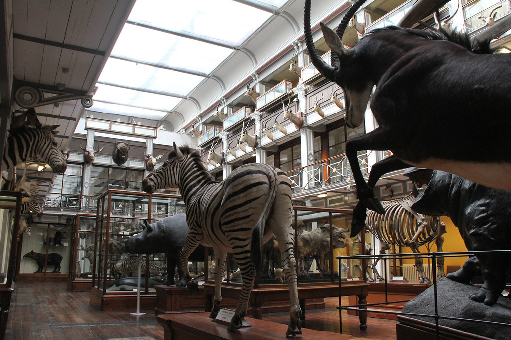 Natural History Museum, Dublin